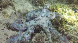 Night swimming with octopus