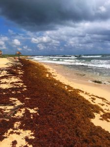 Seaweed covering beaches in Mexico