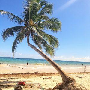 Playa Paraiso Palm Tree
